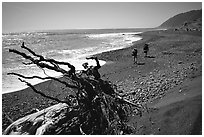 Driftwood and hikers, Lost Coast. California, USA ( black and white)
