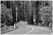 Curving road in redwood forest, Richardson Grove State Park. California, USA (black and white)