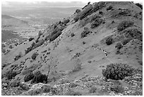 Group of Hikers on a distant trail, Mt Diablo State Park. California, USA ( black and white)