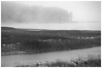 Humbolt Lagoon in the fog. California, USA ( black and white)
