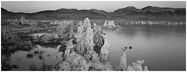Mono Lake Tufa and Sierra Nevada at dawn. Mono Lake, California, USA (Panoramic black and white)