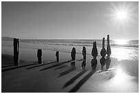 Row of wood pilars and sun near Fort Funston,  late afternoon, San Francisco. San Francisco, California, USA (black and white)