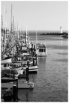 Harbor,  late afternoon. Santa Cruz, California, USA ( black and white)
