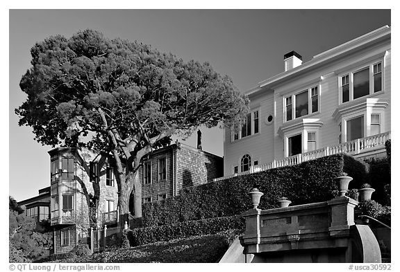 Tree and houses on hill, late afternoon. San Francisco, California, USA