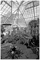 Aquatic plants section inside the Conservatory of Flowers. San Francisco, California, USA (black and white)