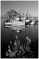 Flowers, fishing boats,and Morro Rock, morning. Morro Bay, USA ( black and white)