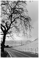 Mount Hamilton road winding on fresh snow covered hills. San Jose, California, USA (black and white)
