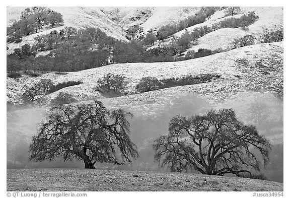 Two oaks and snowy hills, Joseph Grant Park. San Jose, California, USA