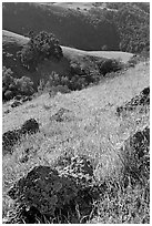 Rocks, poppies, and hillsides, Sunol Regional Park. California, USA (black and white)