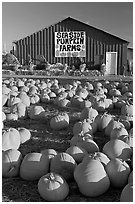 Pumpkins and red barn. California, USA (black and white)