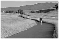 People jogging on trail in the foothills. Stanford University, California, USA (black and white)