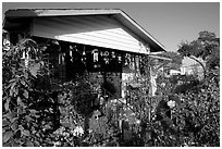 House and frontyard, Watts. Watts, Los Angeles, California, USA ( black and white)