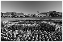 Stanford University S logo in flowers and main Quad. Stanford University, California, USA ( black and white)