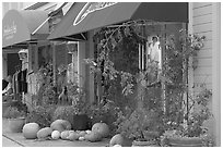 Storefronts decorated with large pumpkins. Half Moon Bay, California, USA (black and white)