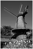 Tulips and Historic Dutch Windmill, Golden Gate Park. San Francisco, California, USA (black and white)