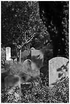 Headstones in the garden of Mission San Francisco de Asis. San Francisco, California, USA (black and white)