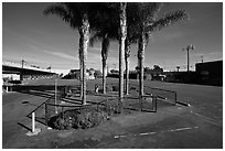 Tiniest park with grass and palm trees, Bergamot Station. Santa Monica, Los Angeles, California, USA (black and white)