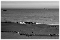 Marine mammals on sand spit from above, Jenner. Sonoma Coast, California, USA (black and white)