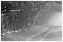 Rural road in fog. California, USA (black and white)