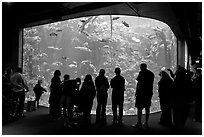 Tourists in front of large tank, Steinhart Aquarium, California Academy of Sciences. San Francisco, California, USA<p>terragalleria.com is not affiliated with the California Academy of Sciences</p> (black and white)