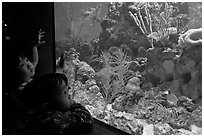 Children looking at aquarium, California Academy of Sciences. San Francisco, California, USA ( black and white)