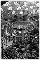 Tourists on spiraling path look at rainforest canopy, California Academy of Sciences. San Francisco, California, USA<p>terragalleria.com is not affiliated with the California Academy of Sciences</p> (black and white)