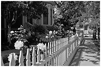 White picket fence and roses in Preservation Park. Oakland, California, USA (black and white)