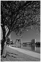 Lake Merritt in the spring with  Pink Flowering Almond. Oakland, California, USA (black and white)
