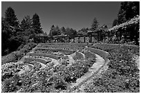 Terraced Amphitheater, Rose Garden. Berkeley, California, USA (black and white)
