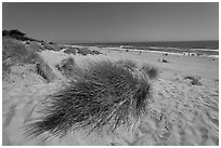 Palm Beach state park. Watsonville, California, USA ( black and white)