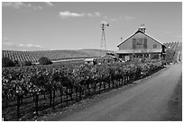 Red barn in vineyard. Napa Valley, California, USA (black and white)