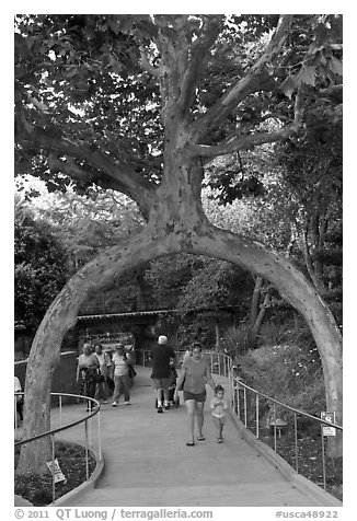 Archway formed by a tree, Gilroy Gardens. California, USA (black and white)