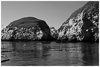 Bird and cliffs, China Cove. Point Lobos State Preserve, California, USA ( black and white)