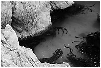 Green waters and kelp, China Cove. Point Lobos State Preserve, California, USA ( black and white)