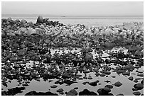 Seabirds and rocks at sunset. Pacific Grove, California, USA (black and white)