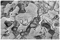 Eroded patterns in shale rocks. Point Lobos State Preserve, California, USA ( black and white)