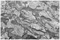 Conglomerate rock. Point Lobos State Preserve, California, USA ( black and white)