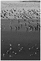 Birds, Carmel River State Beach. Carmel-by-the-Sea, California, USA ( black and white)