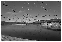 Birds flying above Carmel River. Carmel-by-the-Sea, California, USA ( black and white)