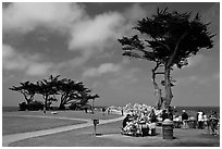 Lovers Point Park. Pacific Grove, California, USA (black and white)