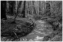 Pictures of Muir Woods National Monument