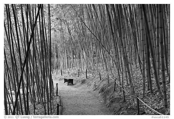 Path in bamboo forest. Saragota,  California, USA
