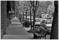 Street with blossoming trees. Saragota,  California, USA (black and white)