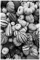 Mix of squash and gourds. Half Moon Bay, California, USA (black and white)