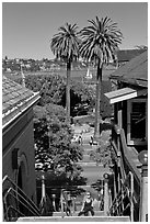 Park and Bay seen from stairs, Sausalito. California, USA ( black and white)