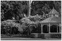 Gazebo and blossoming trees, Ardenwood historic farm regional preserve, Fremont. California, USA (black and white)