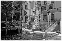 Redwood trees and modern building, UCSC. Santa Cruz, California, USA ( black and white)