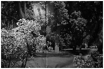 Plants and forest backdrop, Paramount lot. Hollywood, Los Angeles, California, USA (black and white)