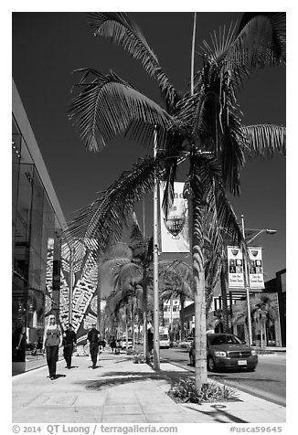 Rodeo Drive. Beverly Hills, Los Angeles, California, USA (black and white)