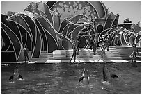 Cirque de la Mer show, Seaworld. SeaWorld San Diego, California, USA ( black and white)